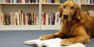 BARK - Read to Dogs @ Main Library | Anderson | South Carolina | United States